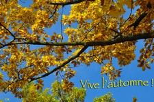 vive l automne
