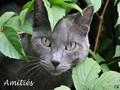 Amitiés (chat gris)